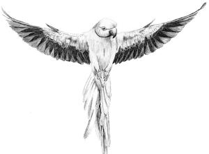parrot-ink