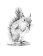 Squirrel Ink