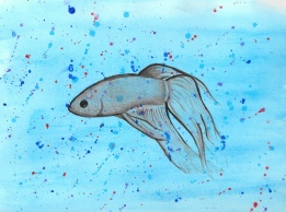 Betta Fish on Watercolour
