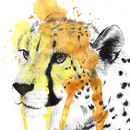 One of my favourite big cats - a cheetah!
