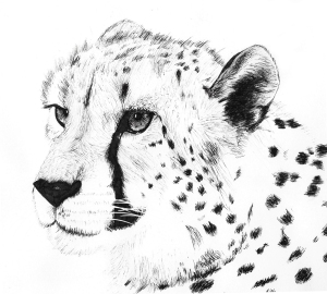 cheetah-ink