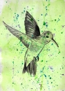 Hummingbird on Watercolour