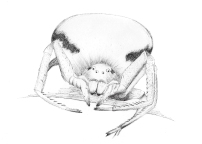 A crab spider