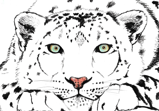 A snow leopard with some pretty intense eyes