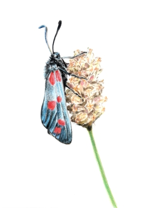 Blue moth for print- light flower
