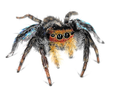 CP Jumping Spider 1