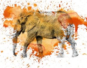 Orange Elephant - 11x14 Ink and Watercolour