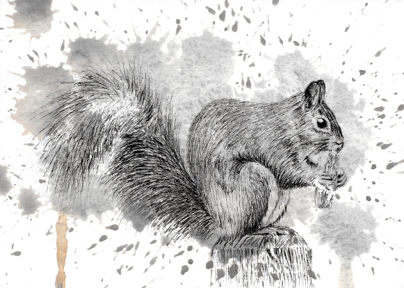 Grey Squirrel - 5x7 Ink and Watercolour