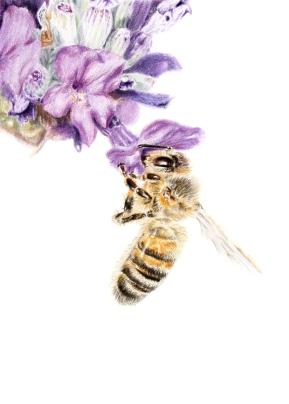 Purple bee for Print
