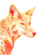 Dualchrome Coyote