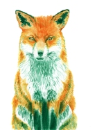 Dualchrome Fox