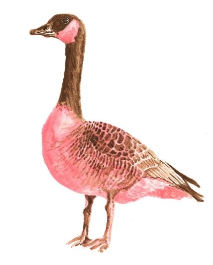 Dualchrome Goose