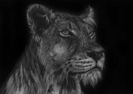 A very regal lioness