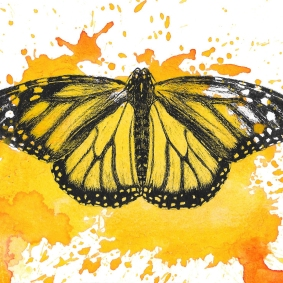 Monarch Butterfly - 5x7 Ink and Watercolour