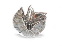 A pill bug