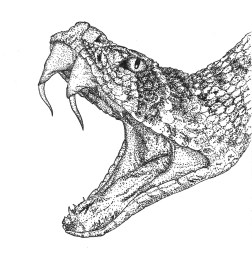A rattlesnake done in pointillism