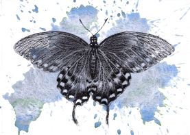 Spicebush swallowtail - 5x7 Ink and Watercolour