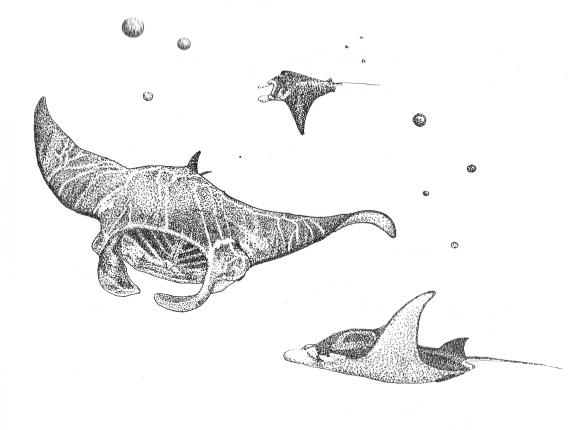 'Underwater'