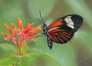 Butterfly - 5x7 Pastel