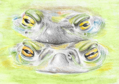 One of my early coloured pencil pieces, done about a year and a half ago