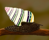 A digitally painted candy cane snail