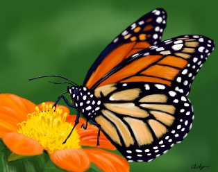 Digitally painted monarch butterfly