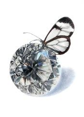 April: Diamond - Glasswing Butterfly - 5x7 Coloured Pencil