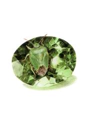 August: Peridot - Green Shield Bug