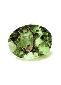 August: Peridot - Green - 5x7 Coloured PencilShield Bug