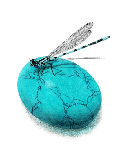 December: Turquoise - Common Blue Damselfly