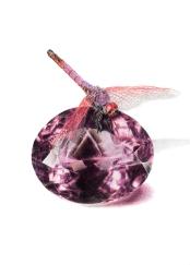 February: Amethyst - Violet Dropwing - 5x7 Coloured Pencil