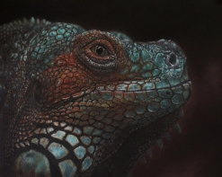 Iguana - 8x10 Coloured Pencil with Pastels