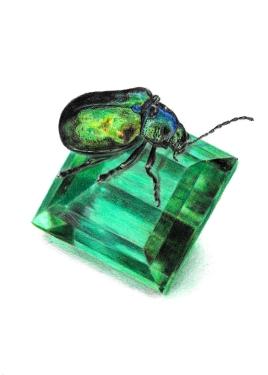 May: Emerald - Dogbane Beetle - 5x7 Coloured Pencil