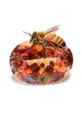 November: Topaz - Honeybee - 5x7 Coloured Pencil